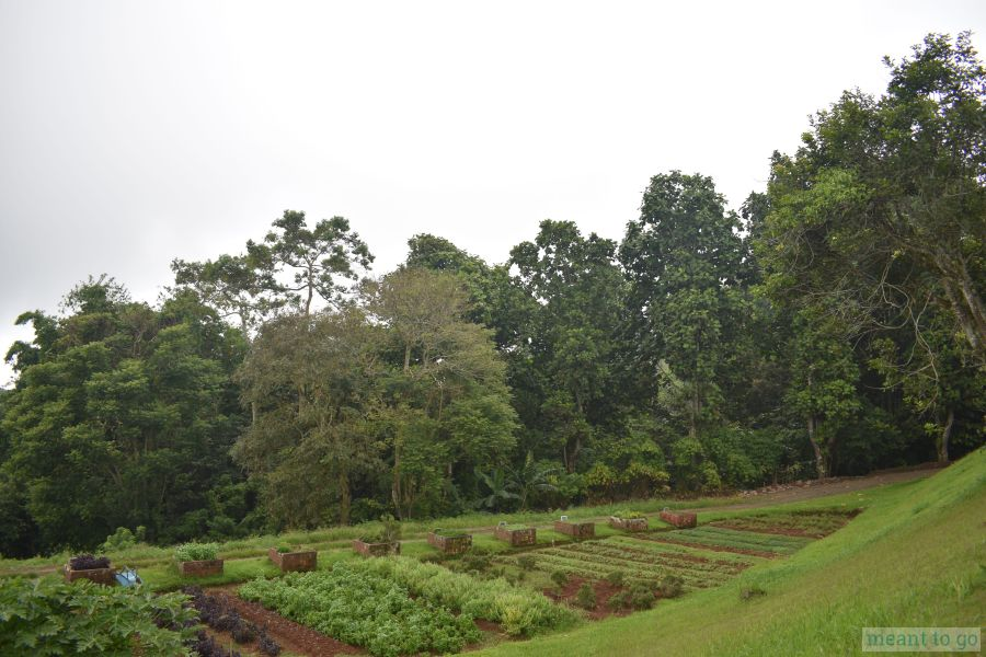 Lines of vegetable garden at Bahay Ni Lola, Eden Nature Park, Davao City