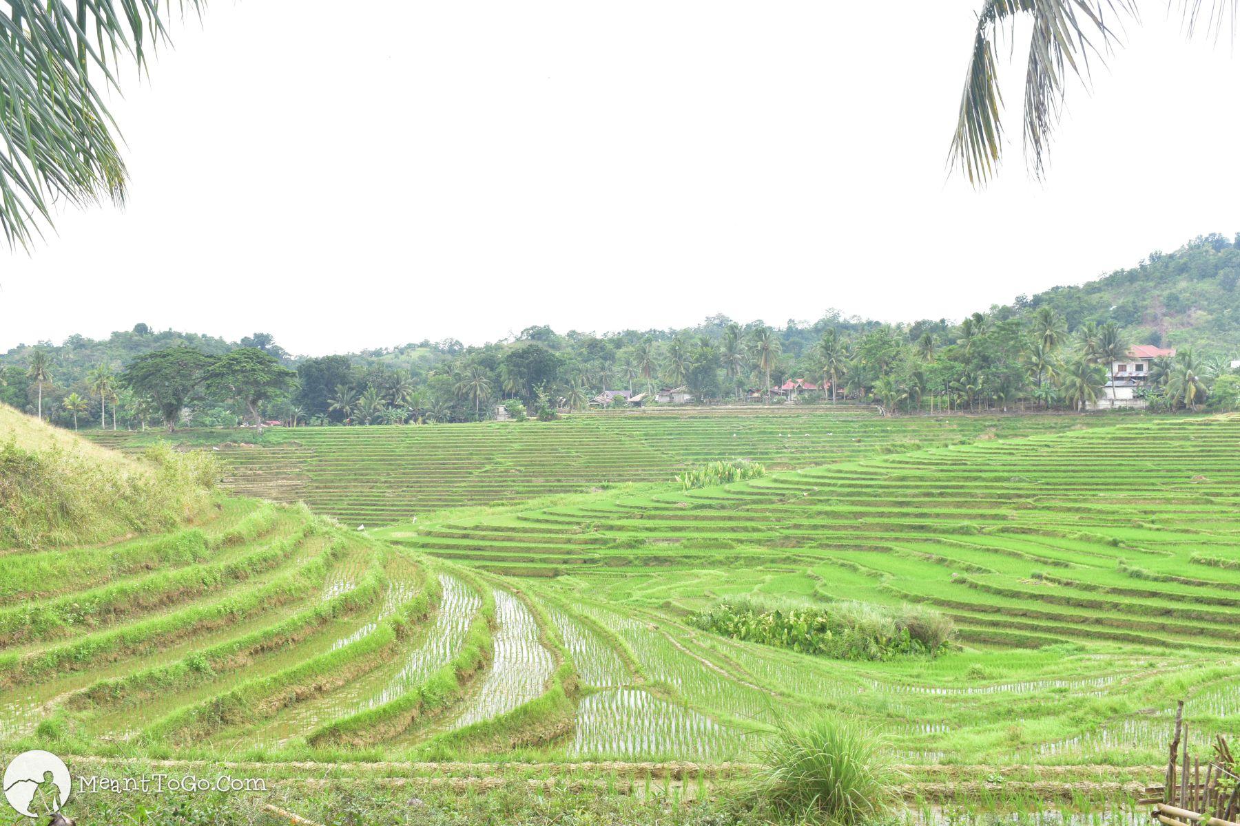 Cadapdapan Rice Terraces, Candijay, Bohol, Philippines