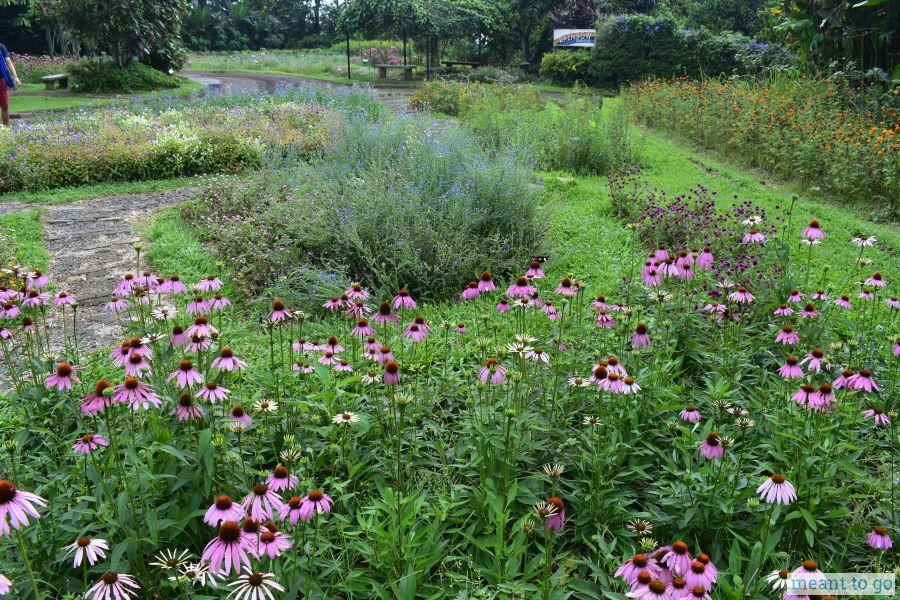 Flower Garden near the Amphitheater - Eden Nature Park, Davao City