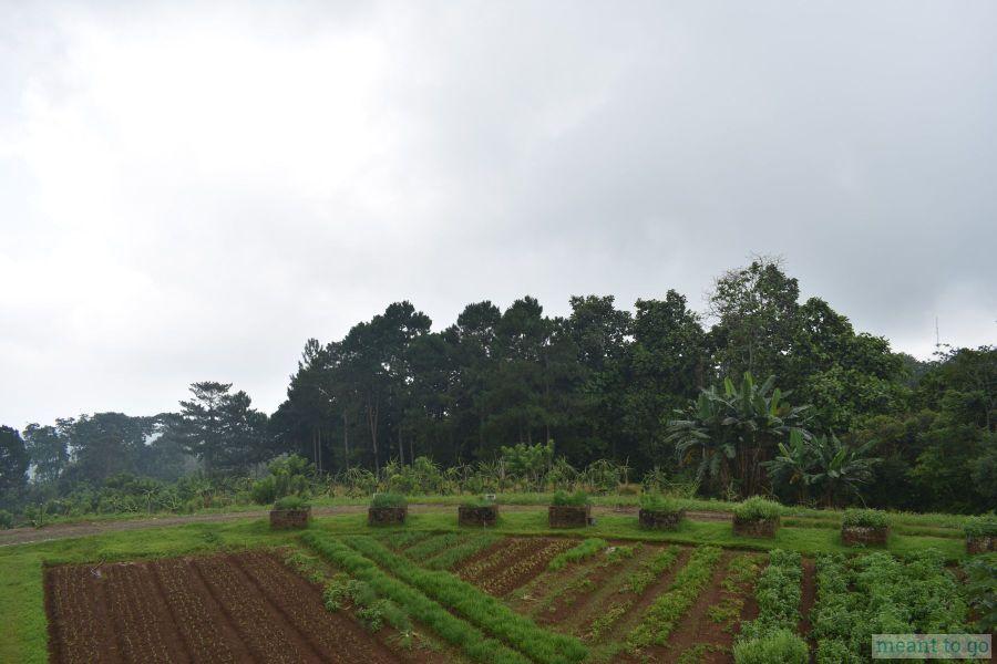 Vegetable Farm at Bahay Ni Lola