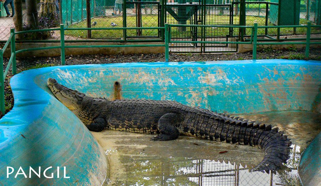 Crocodile Park Davao City