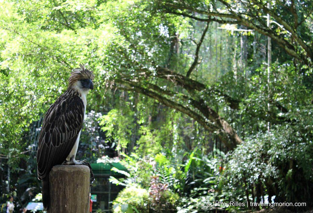 Philippine Eagle Center - Malagos, Davao City