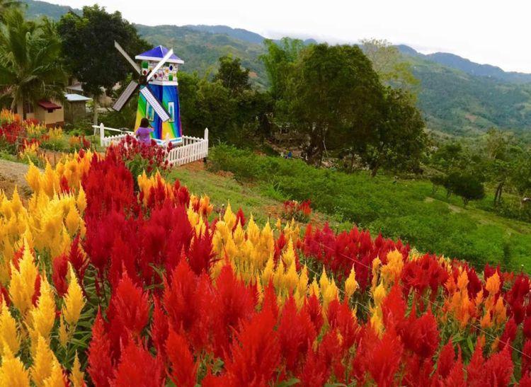 Sirao Flower Farm , Cebu City