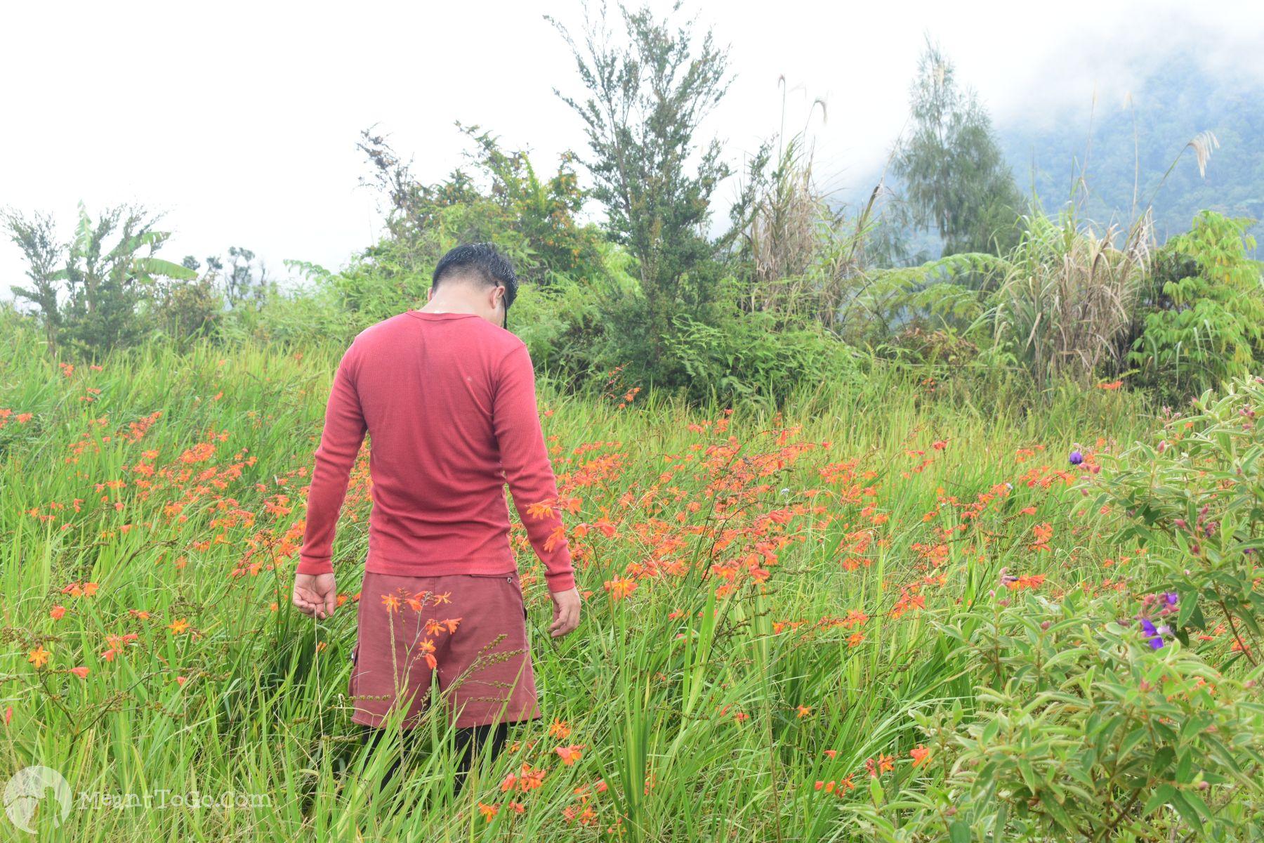 The trail of Sicao Falls, Tamayong, Calinan, Davao City