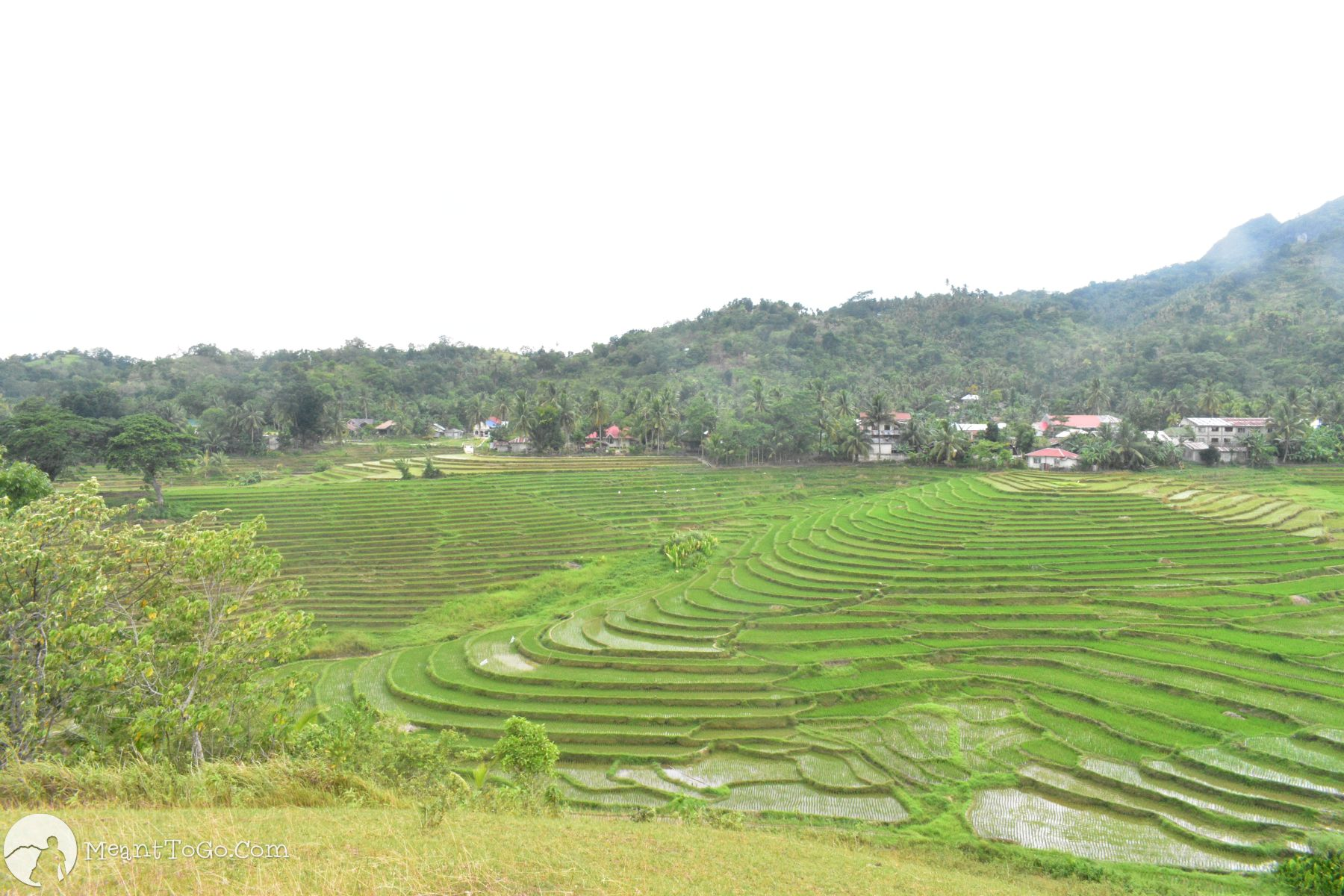 cadapdapan rice terraces, candijay, bohol
