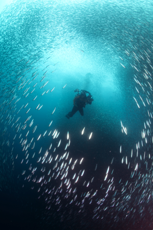 Swimming with Sardines in Moalboal, Cebu